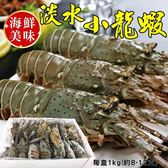 782元起【海肉管家-全省免運】印尼野生淡水小龍蝦x1盒(1kg±10%含冰重/盒 每盒約8-12隻)