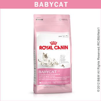★國際貓家★Royal Canin 皇家-離乳貓專用BC34(2kg)