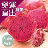 沁甜果園SSN 屏東紅肉火龍果(5-6顆裝/5台斤)E00900094【免運直出】