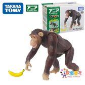 TOMY多美卡安利亞仿真野生動物模型猴子黑猩猩香蕉兒童男孩玩具