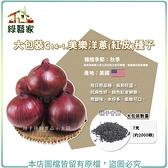 【綠藝家】大包裝C14-1.美樂洋蔥(紅皮)種子7克(約2000顆)