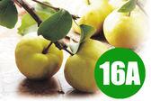 【優果園】卓蘭牛奶新興梨★(18顆/箱)★16A大梨/每顆約530g