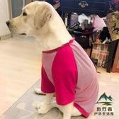 大型犬寵物衣服狗狗衣服金毛拉布拉多大狗中型夏季薄款【步行者戶外生活館】