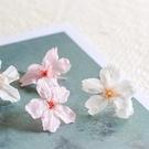 日本進口,prehana永生櫻花,花徑2.5-3.5*高約1.5公分,單朵價