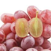【果之蔬】美國加州紅寶石麝香無籽葡萄X1盒【每盒500克±10%】