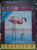 挖寶二手片-B14-019-正版DVD*動畫【紅色羽翼-火鶴之謎/迪士尼】-自然生態