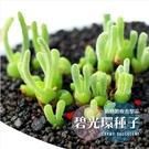 〔買4送1〕 CARMO多肉植物兔斯基碧光環盆栽套組【G52】