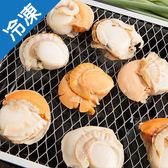 日本直送超大顆熟凍帆立貝2盒(500g±5%/盒)【愛買冷凍】