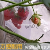 歸田廬楊桃火龍果草莓青棗番石榴無花果套袋防鳥防蟲袋子水果網袋 交換禮物