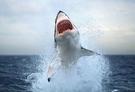 鯊鯊多規格