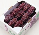 【果之蔬-全省免運】日本松本縣珍珠葡萄X2kg±10% (含箱重/約10-11串)
