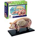 【4D Master】26102 立體拼組模型 動物解剖 半透視 豬