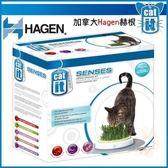 *KING WANG*【特價:480含運】加拿大Hagen赫根《no.50755貓草香草樂園》貓咪益智解壓玩具