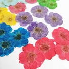 梅花壓花混色賣場,一份3色共12朵