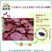 【綠藝家】大包裝A54.全紅杏菜種子250克(約30萬顆)