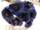 索拉花,樹皮向日葵,尺寸5公分,單朵