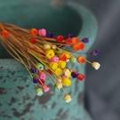 快樂花小花束,迷你進口乾花真花藝術,乾花DIY裝飾拍照道具,乾燥花,彩色一份10支