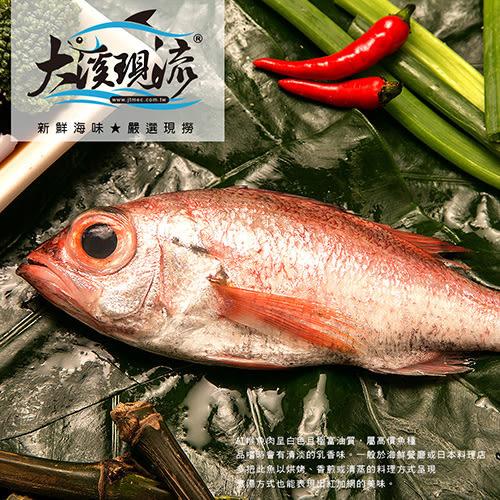 野生現撈 紅喉魚「赤鮭」( 小尾 250g  一公斤±10% )【大溪現流】