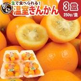 【果之蔬-全省免運】日本空運進口宮崎溫室金桔X3盒【每盒230克±10%】