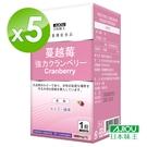 日本味王 強效蔓越莓錠(30粒/瓶) x 5