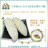 【綠藝家】大包裝G23.仙子白皮苦瓜種子15顆