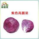 【綠藝家】B19紫色高麗菜種子50顆...