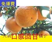最早橘子最香的 佛利蒙柑 10月底水果花蓮無毒農業 8斤 黃金福柑 雙11禮盒