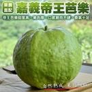 【果之蔬-全省宅配免運】帝王芭樂x1箱(5斤±10%含箱重/箱)