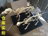 動物標本 骨科器械 狗骨骼標本模型 寵物動物狗貓犬 教學骨架骨頭 骨骼模型 潮先生igo