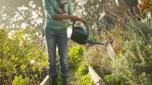 How to help your garden survive the heatwave