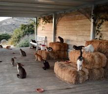 Greek cat sanctuary 'overwhelmed' with emails after advertising paid job on idyllic island with 55 felines