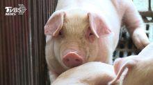 地方萊豬0檢出牴觸中央 衛福部:明年無效