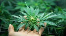 This Marijuana Stock Holds 'Key To Winning The U.S. Market'