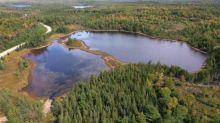Envenenar un lago para acabar con una especie invasora, la estrategia de último recurso que van a usar en Canadá