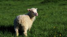 Guelph reconsiders goats, sheep as pets