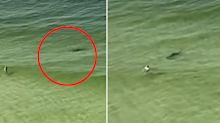 TikTok user films scary moment shark charges at oblivious swimmer