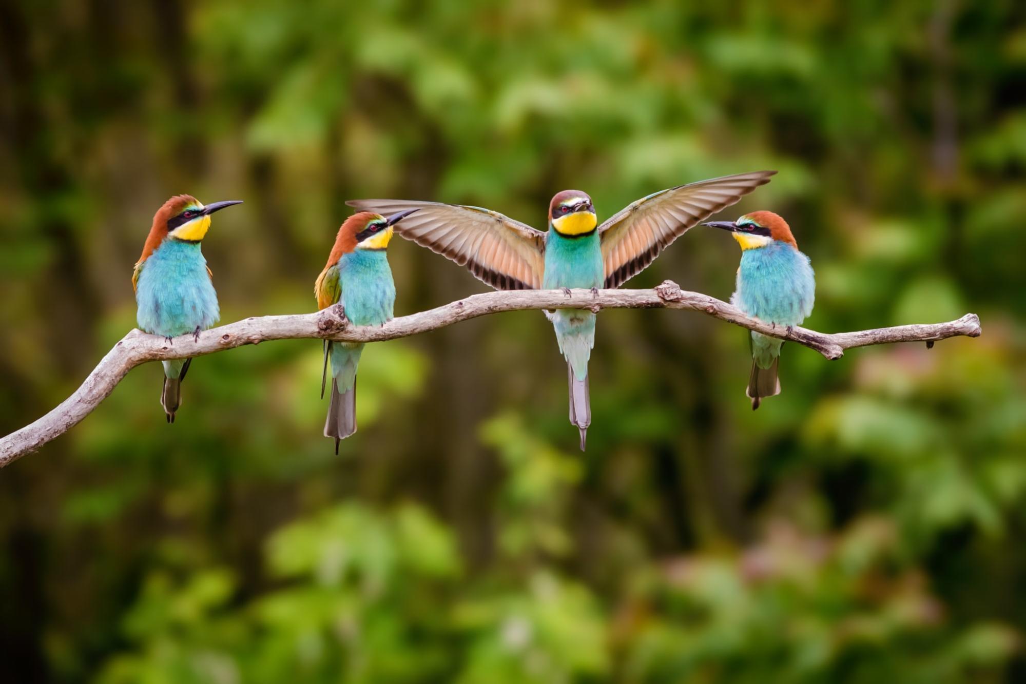 Kuş gözlemciliğine yeniden aşık olmama yardımcı olan teknoloji | Engadget