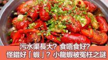 食神教路:小龍蝦3大疑問 原來一直怪錯好「蝦」?