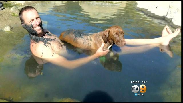 Missing Arcadia Firefighter's Dog Spotted Near Fillmore