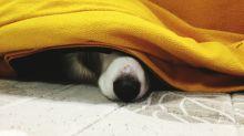 Pirotecnia: 5 tips para calmar a tu perro