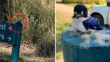 'Please explain': Alarm after native birds found GLUED to welcome sign