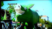 Only On 9: Green Inflatable Pig -- Sham Hock -- Has Been Stolen Before St. Patrick's Day