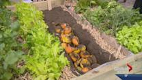 Sask. cultivating new generation of gardeners