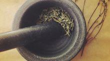 Toloache: más que una poción de amor, una planta sagrada mexicana de mucho cuidado