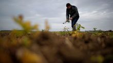 French regulator says pesticides a priority in curbing new plant diseases