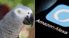 Rocco The Cheeky Parrot Keeps Using Amazon's Alexa To Order Snacks
