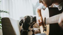 Melhores amigos: confira 5 músicas dedicadas a animais de estimação