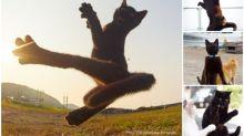黑喵之躍動 日本「貓貓拳」攝影師Twitter撐黑喵
