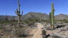 La moda hipster que podría poner en riesgo la vegetación de los desiertos americanos