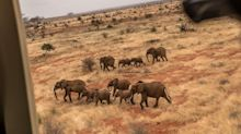 De Beers Moving 200 Elephants to Mozambique to Restore Herds